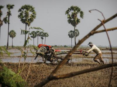 USAID photo of rice farmer