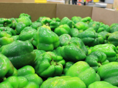 Florida growers made many donations to the hungry early in the pandemic, including these peppers. (courtesy FFVA)