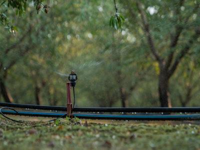 Almond_micro_irrigation_836x627.jpg