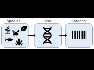 DNA Barcoding
