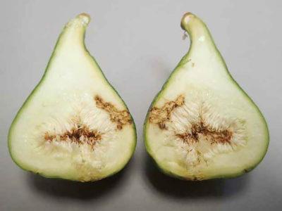 damaged-figs-836x627.jpg
