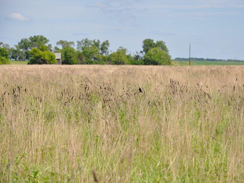 CRP-pasture (conservation reserve program)
