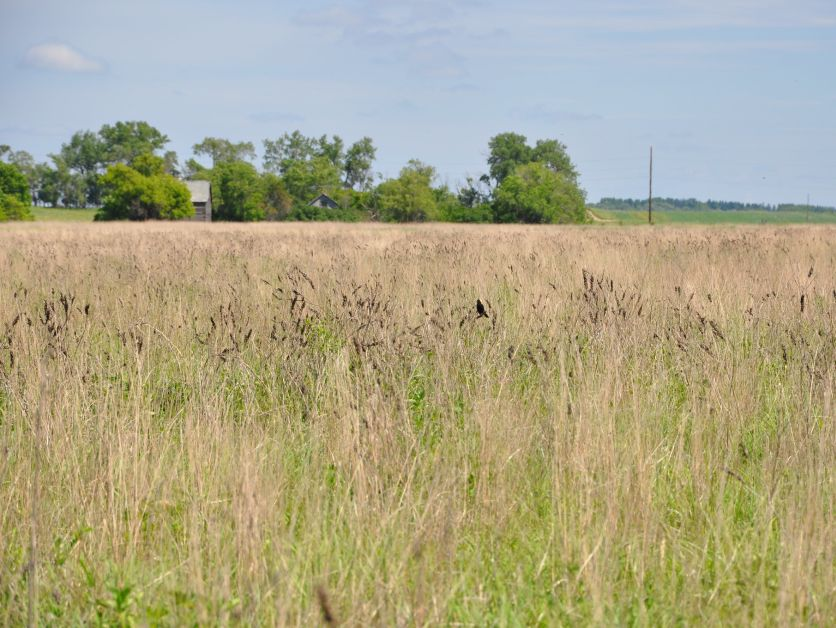 CRP-grazing (conservation reserve program)