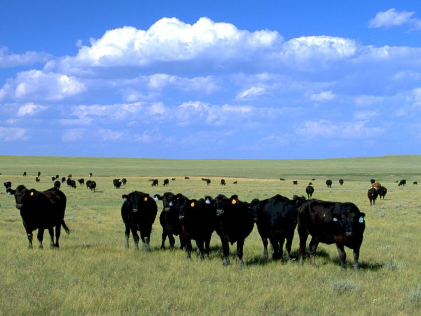Grazing in South Dakota