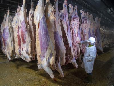 Usda beef inspection 1