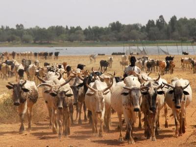 Livestock-africa