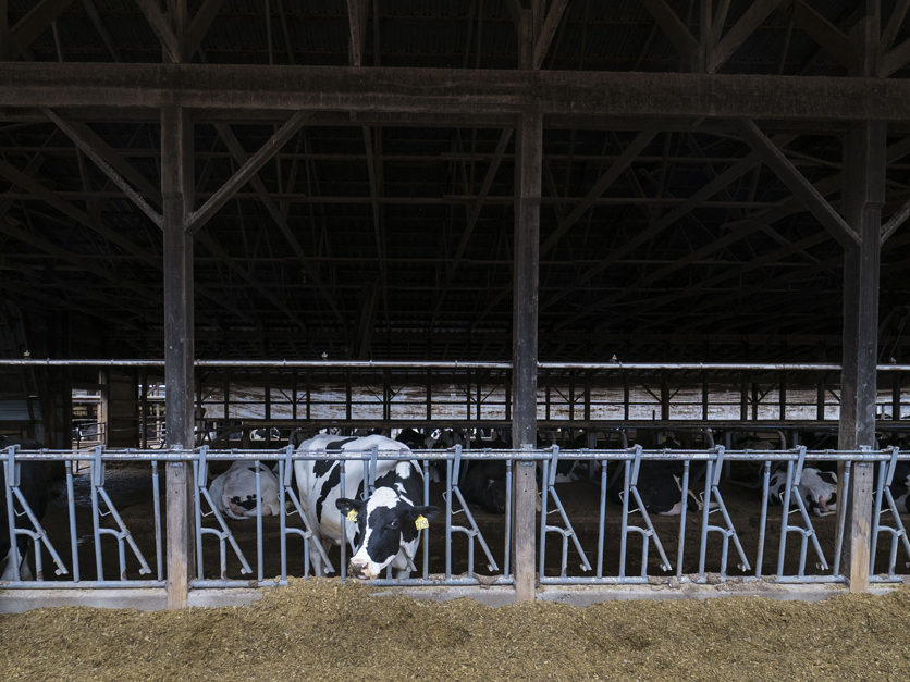 Has The California Dairy Industry Gone Sour 2018 03 06