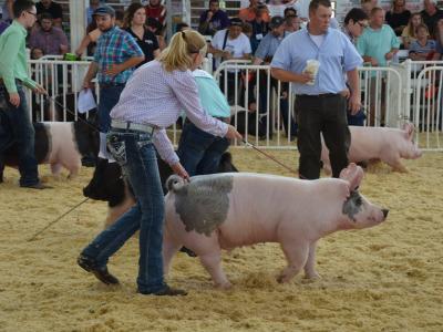 Pig show world pork expo 18