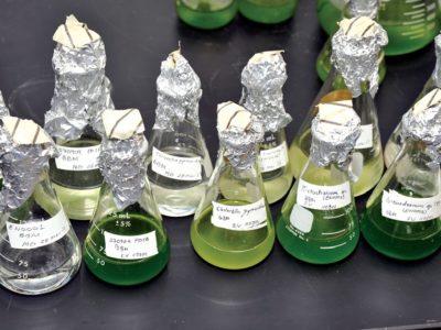 algae fuel