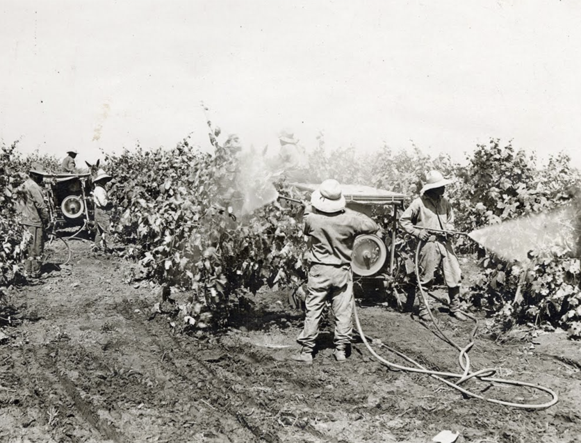 Pesticide spraying in 1920
