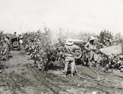 Pesticide spraying in 1920