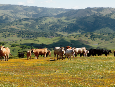 California rangeland