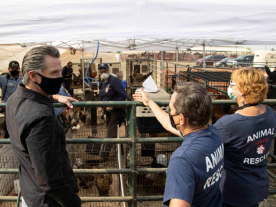 Newsom tours animal rescue in Oroville