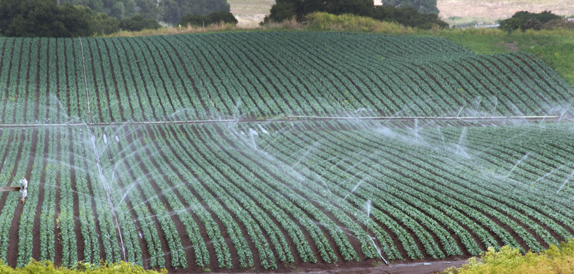 Salinas Valley irrigation