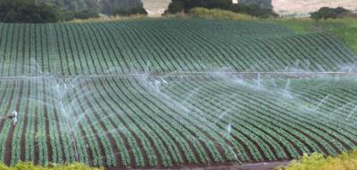 Salinas Valley irrigation