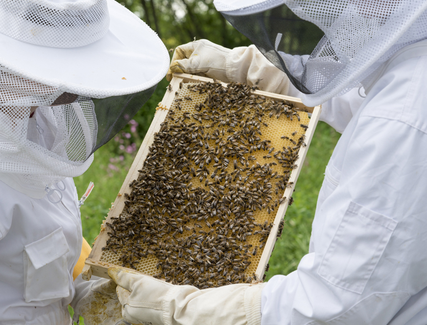 beekeepers and beehive