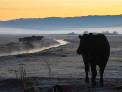 cattle water DWR