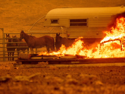 horses in fire Lairmore