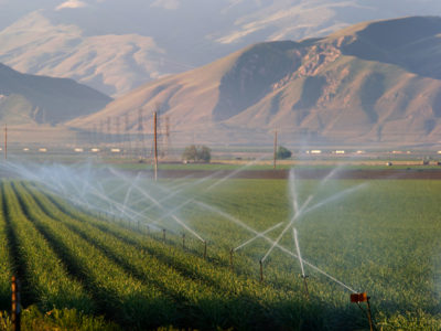 irrigated fields san joaquin valley DWR