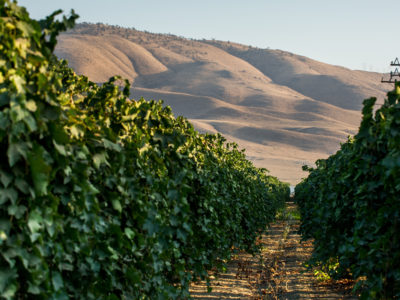 Kern County vineyard