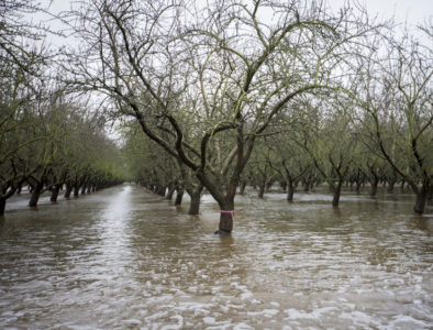 orchard flooding