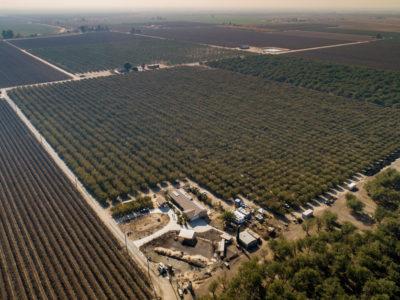pistachio farm