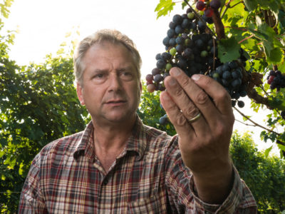 vineyard manager