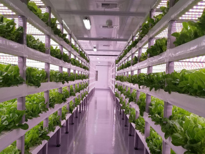 Vertical_farming_2
