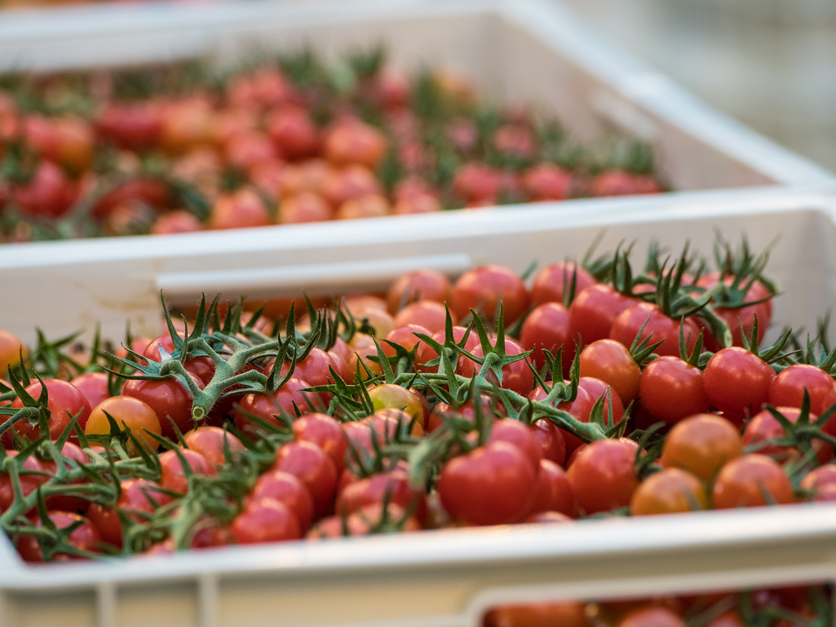 US reaches trade deal with Mexican tomato growers | 2019-08