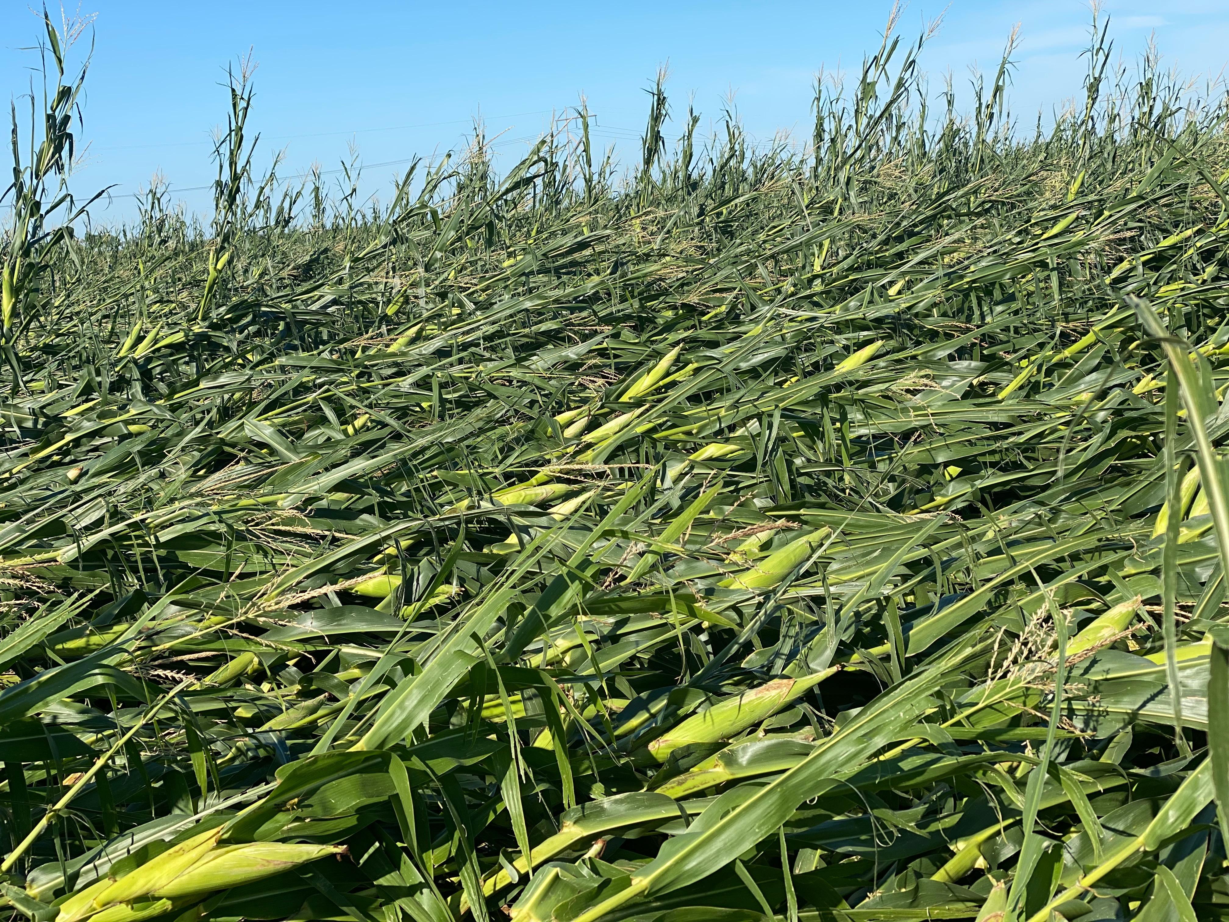 Iowa corn derecho damage