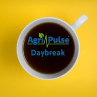 daybreakpodcastcup