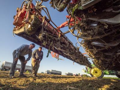 Sugarbeet harvest perdue zippy