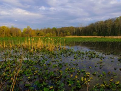 Chesapeake Bay wetlands