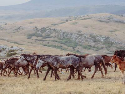 Horses_Range