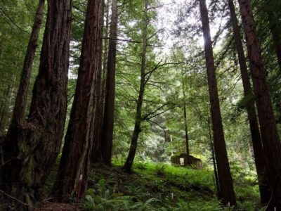 Forest_Pacific_Northwest