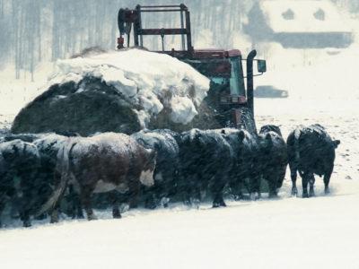 Blizzard feeding