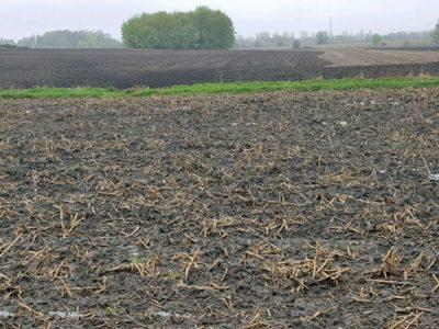 Wet spring field