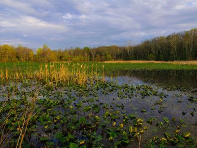 Chesapeake Bay wetland