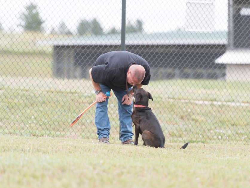 Image of: Hunting Glen Golden With Dog Bangor Daily News Usda Training Dogs To Sniff Out Bird Flu Outbreaks 20180622