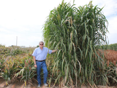 Jeff Dahlberg with sorghum