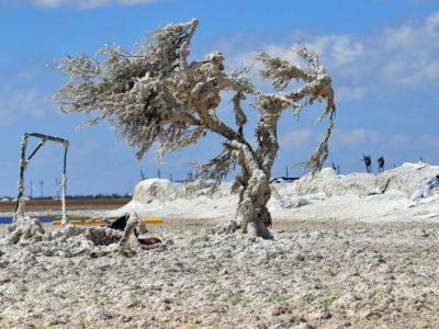 Cotton on Tree