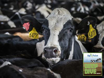 Dairy cow holestein 2 dd logo