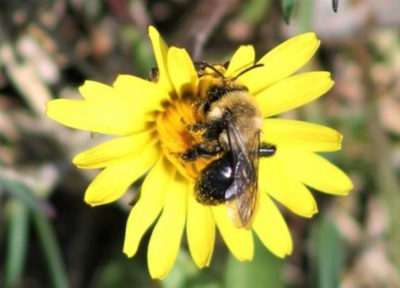 bee flower 836x627