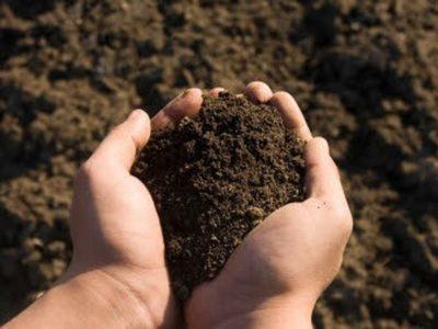 Soil in hand