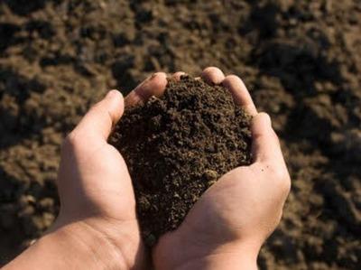 Soil pic 836