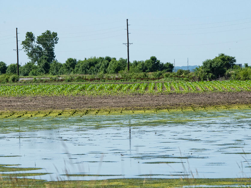 2019 flooded crop field