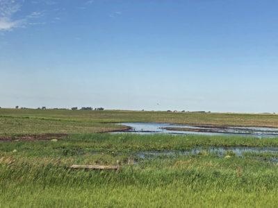 2019 flooded crop field