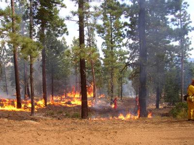 Wildfire_naturaldisaster_firefighter