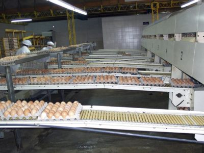 eggs conveyor belt