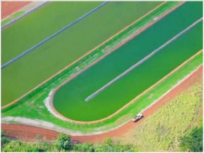 algae track